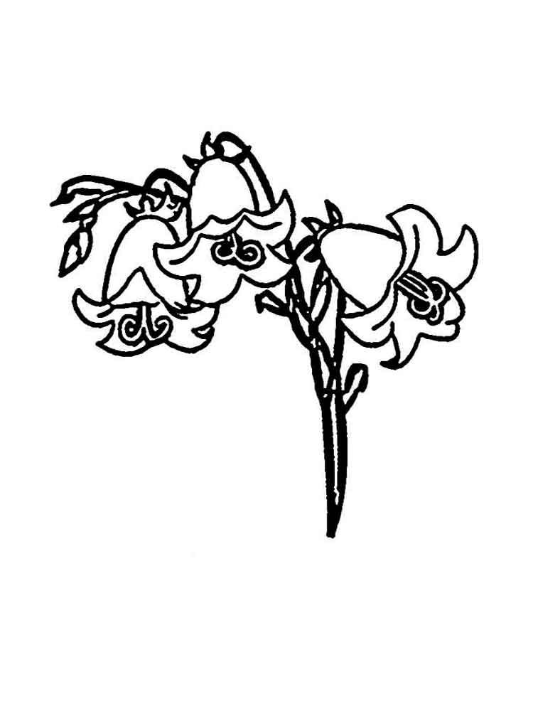 raskraski-cvetok-kolokolchik-1