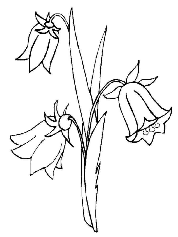 raskraski-cvetok-kolokolchik-11