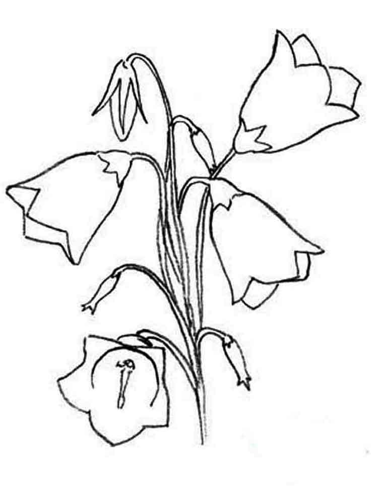 raskraski-cvetok-kolokolchik-14
