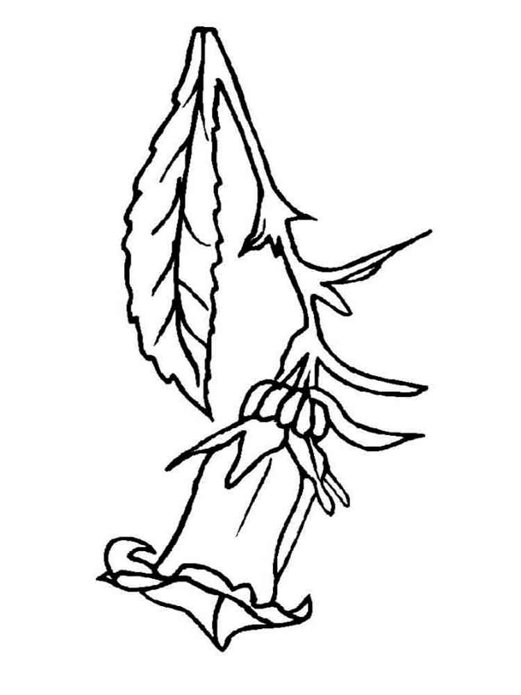 raskraski-cvetok-kolokolchik-2