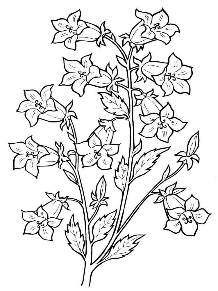 raskraski-cvetok-kolokolchik-3