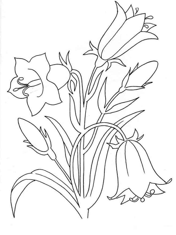 raskraski-cvetok-kolokolchik-5