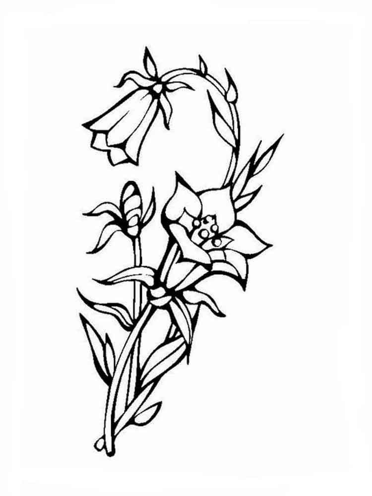 raskraski-cvetok-kolokolchik-9