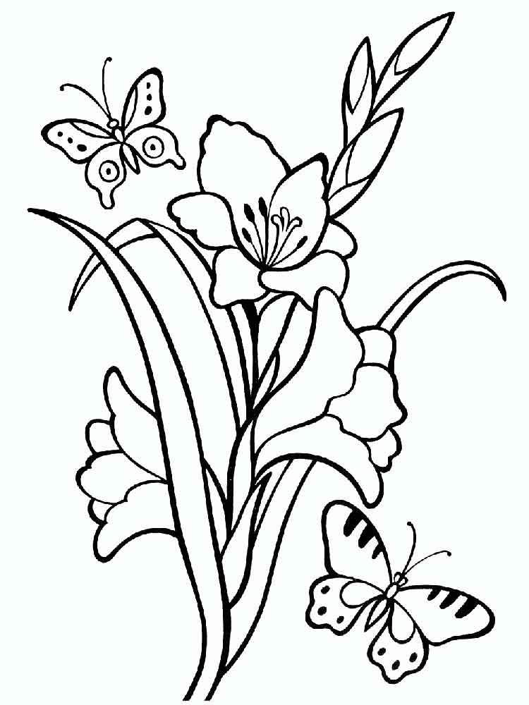 raskraski-gladiolus-4