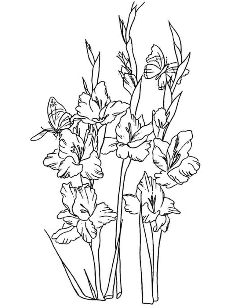 raskraski-gladiolus-5