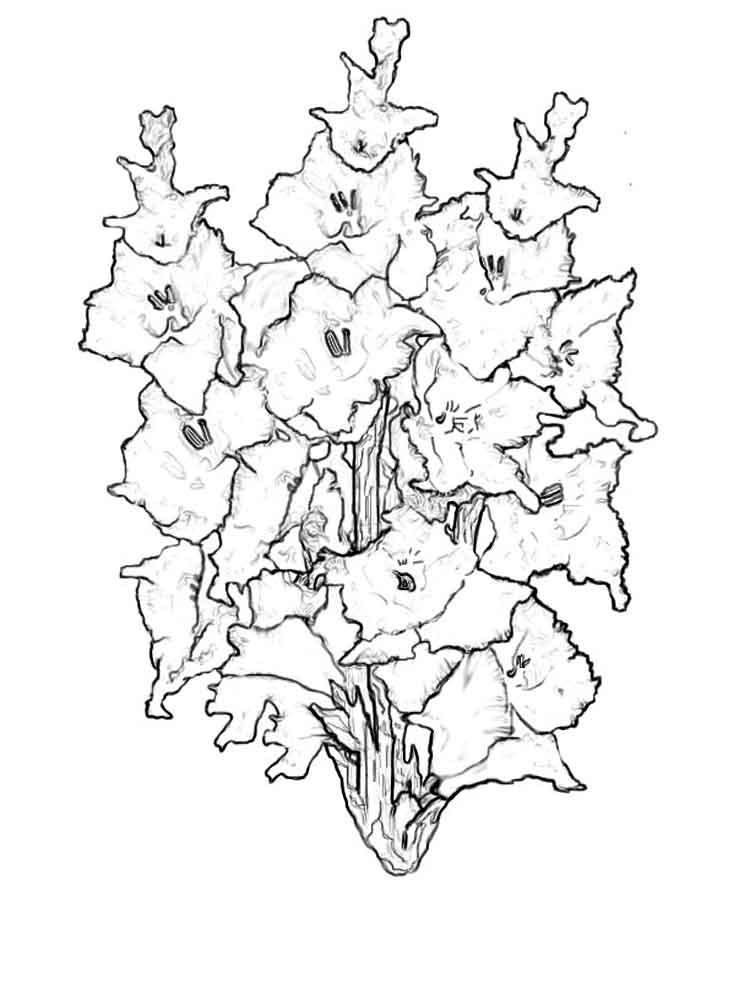 raskraski-gladiolus-8