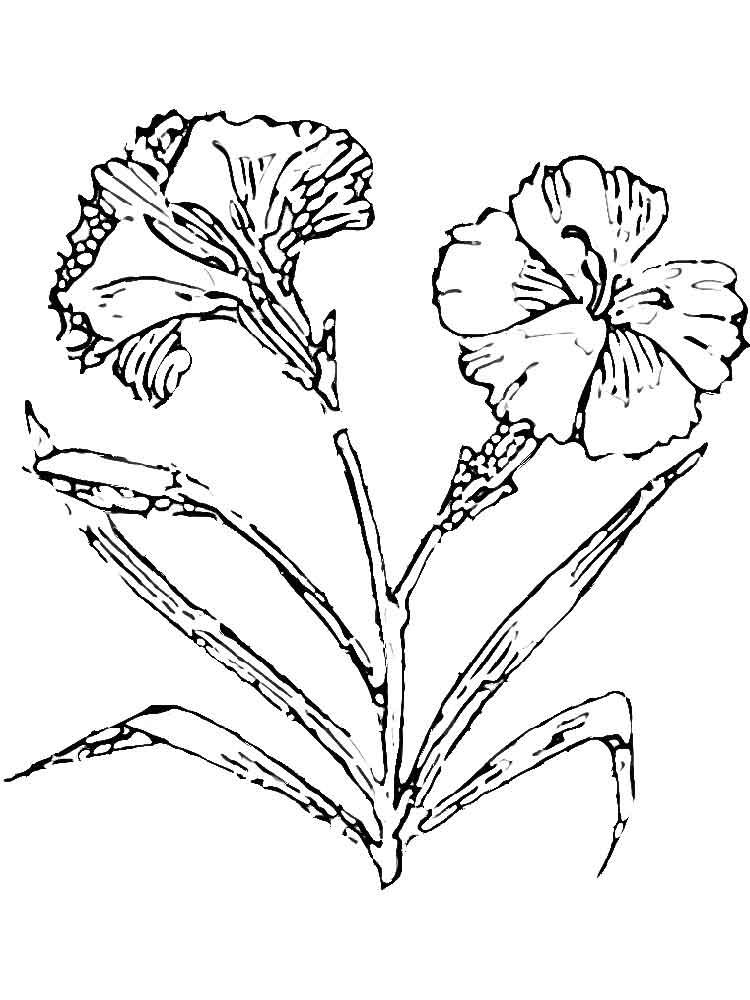 raskraski-gvozdika-12