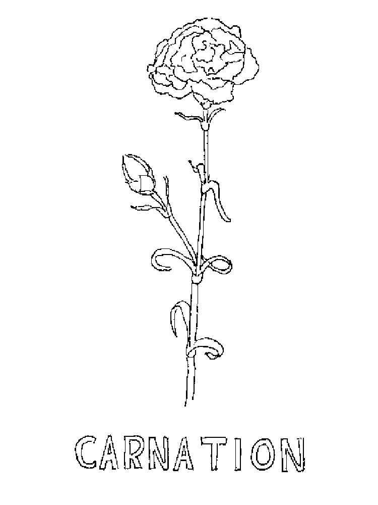 raskraski-gvozdika-3