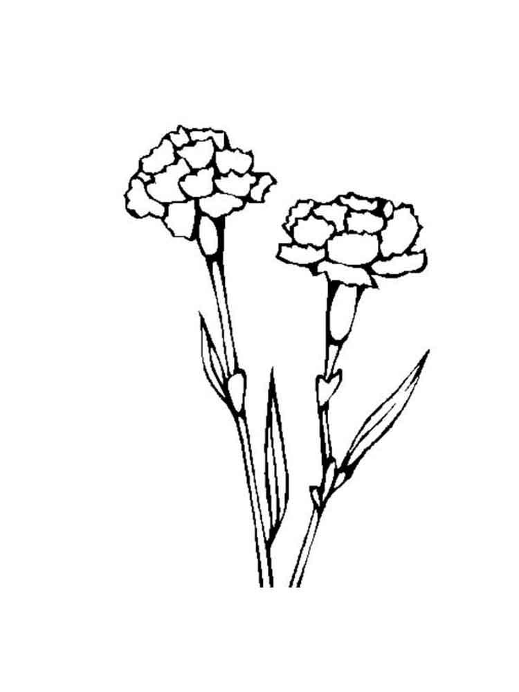 raskraski-gvozdika-7