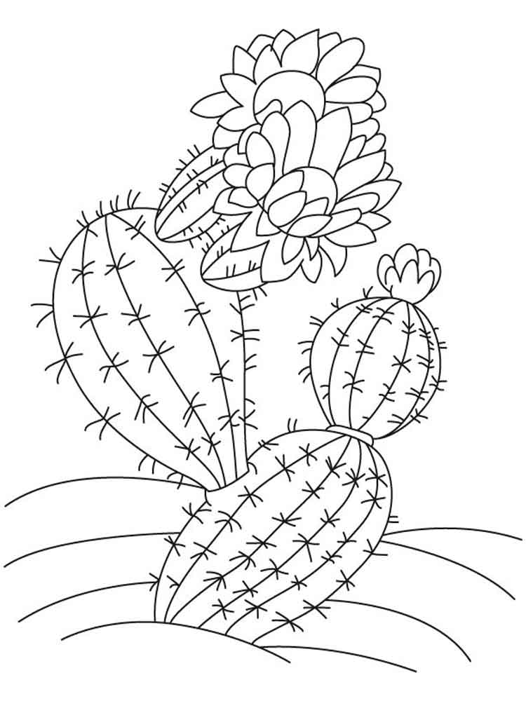 raskraski-kaktus-12