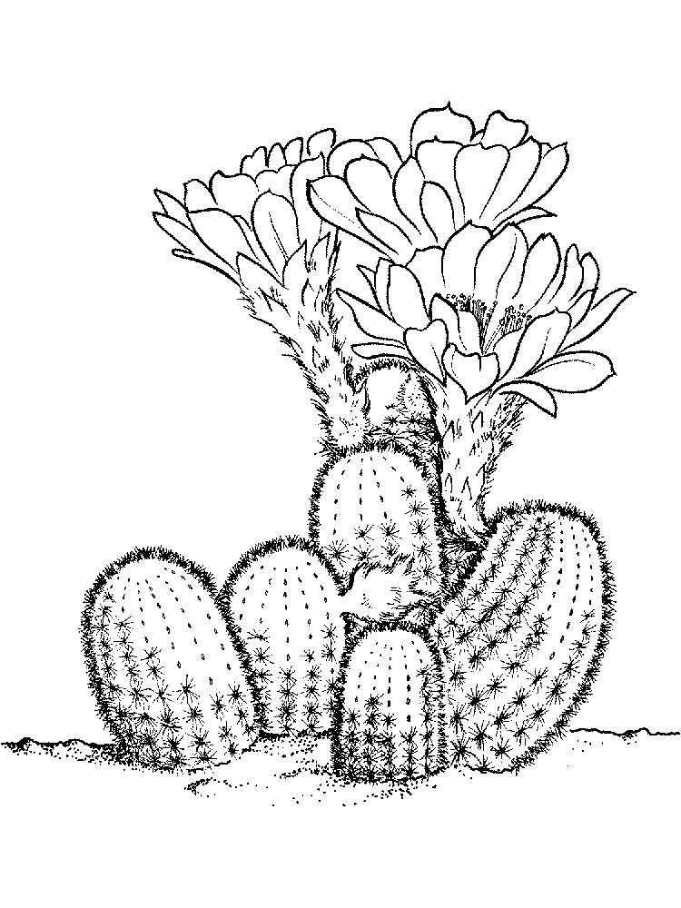 raskraski-kaktus-13