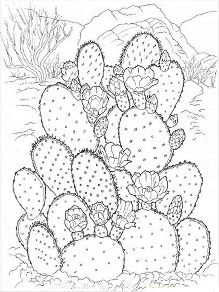 raskraski-kaktus-2