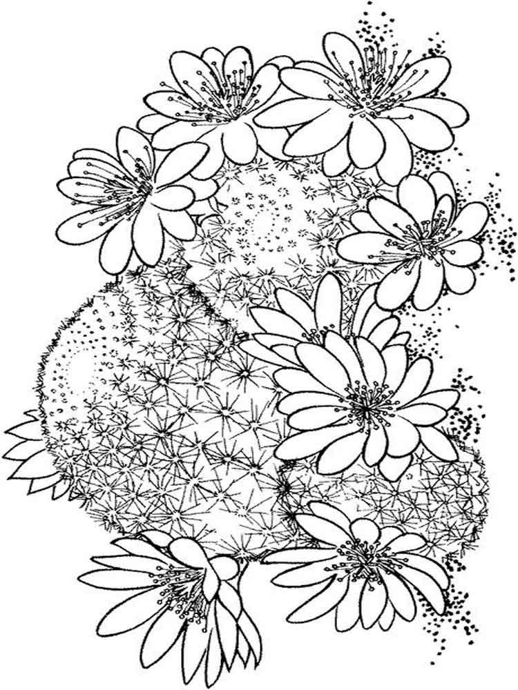 raskraski-kaktus-4