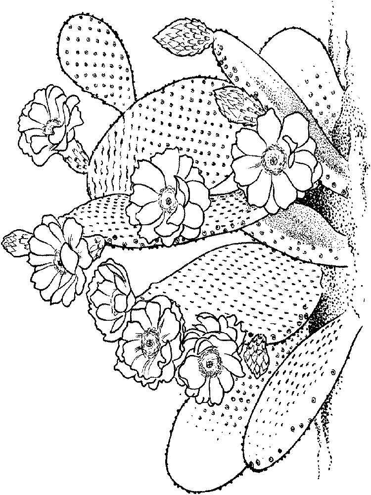 raskraski-kaktus-8