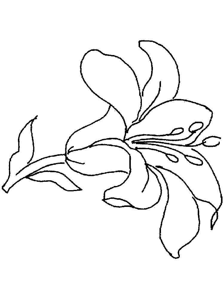raskraski-liliya-15