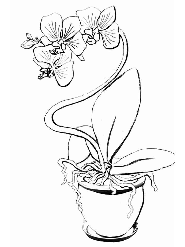 raskraski-orhideya-1