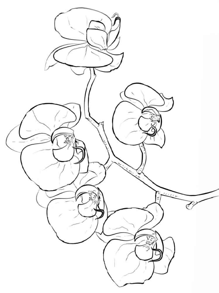 raskraski-orhideya-10