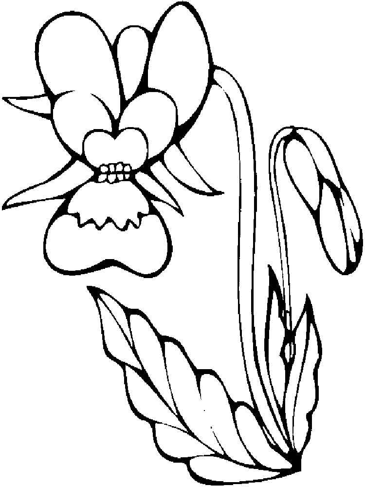 raskraski-orhideya-11