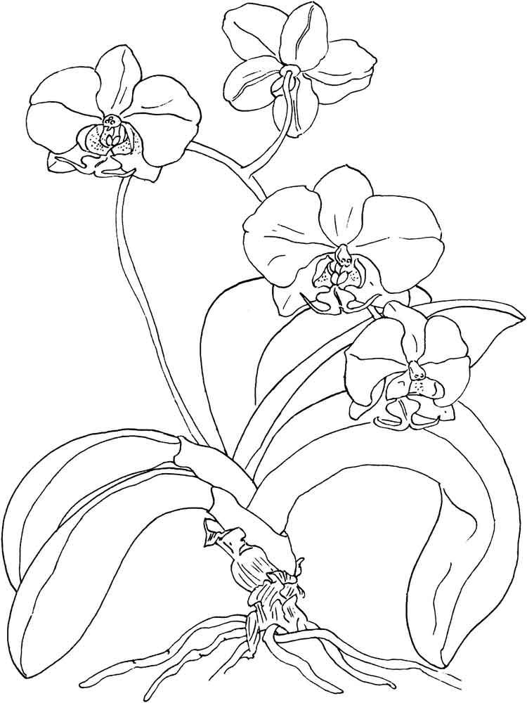 raskraski-orhideya-13