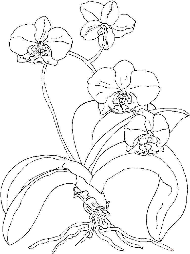 raskraski-orhideya-14