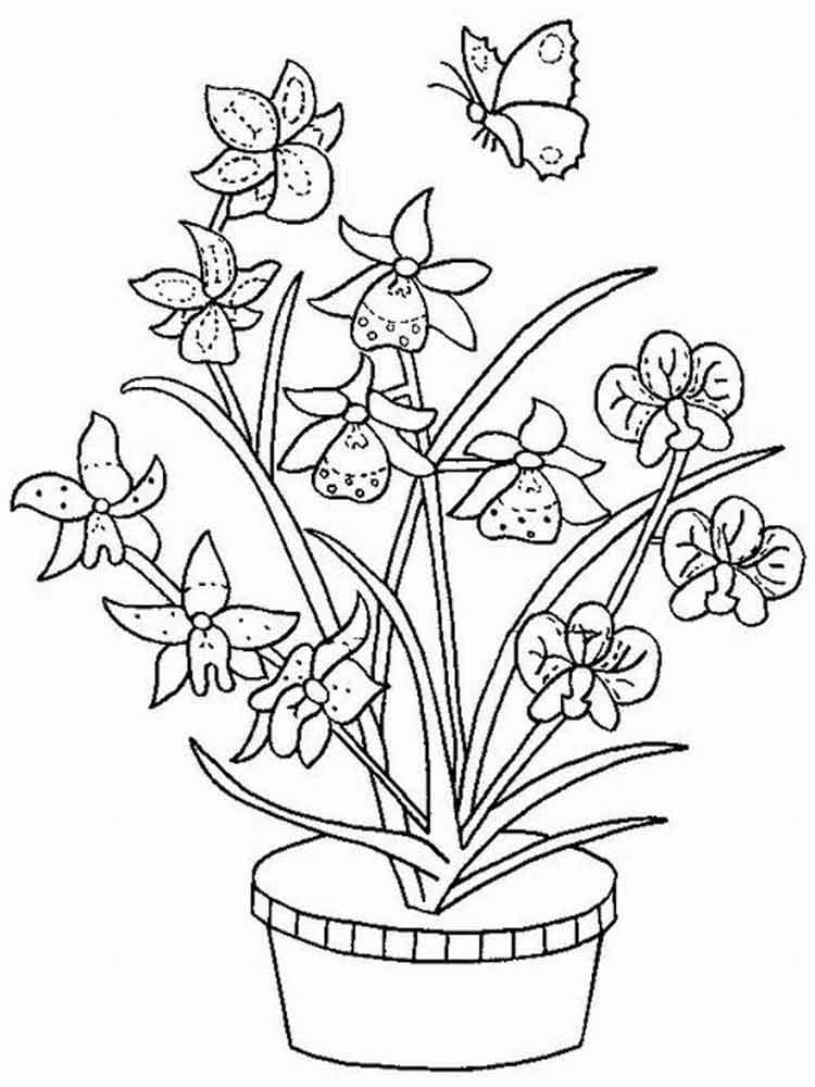 raskraski-orhideya-15