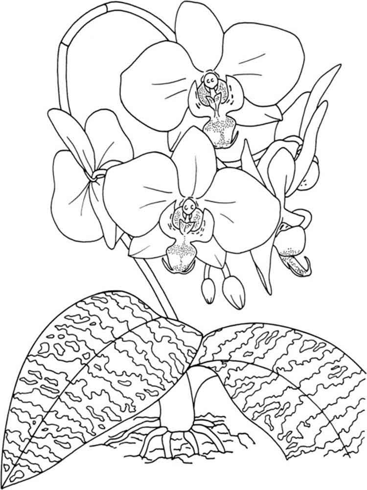raskraski-orhideya-3
