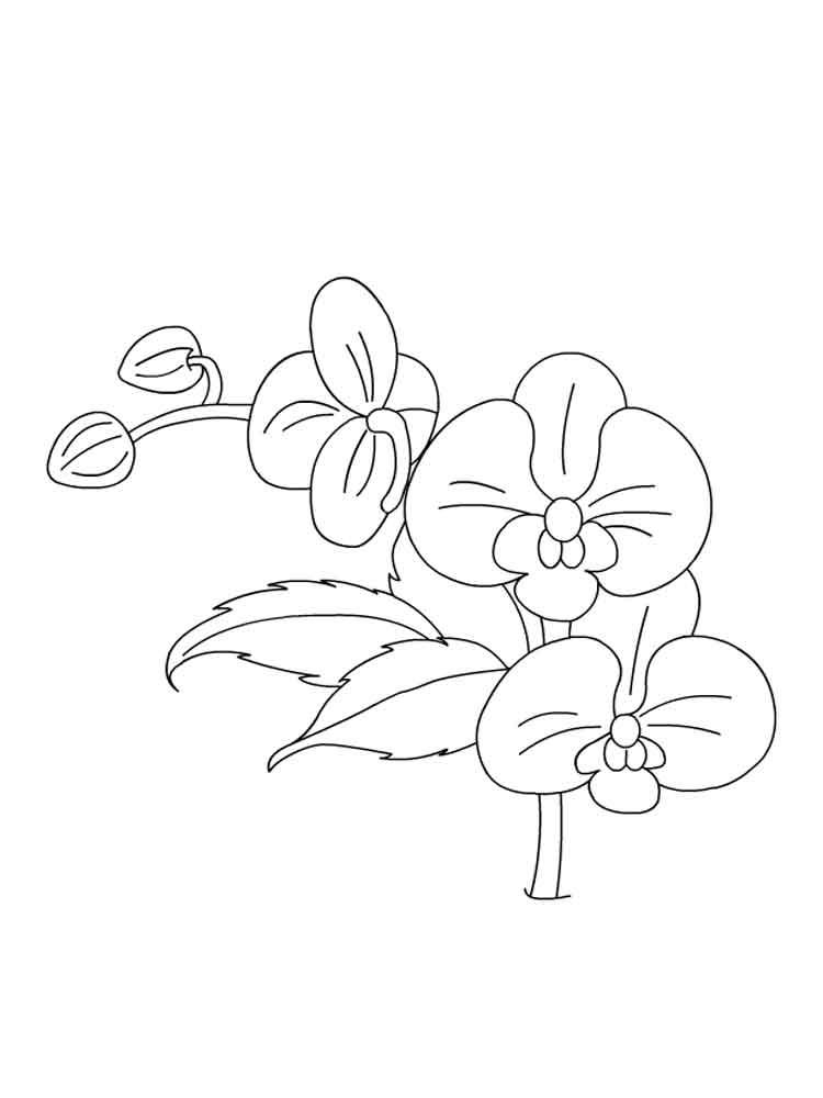 raskraski-orhideya-5