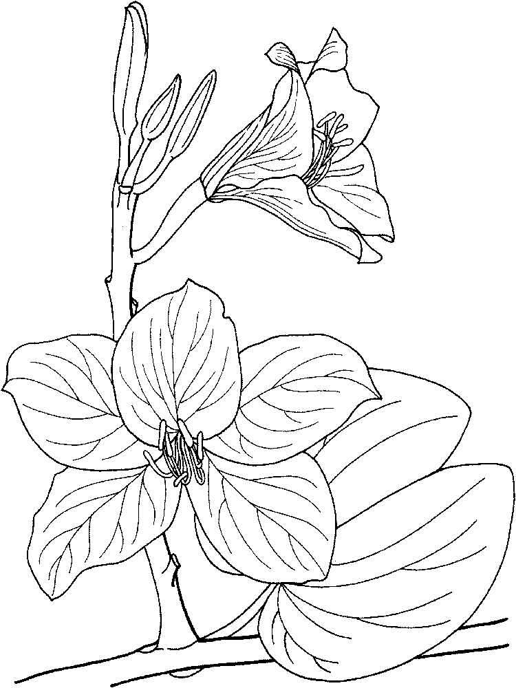 raskraski-orhideya-6