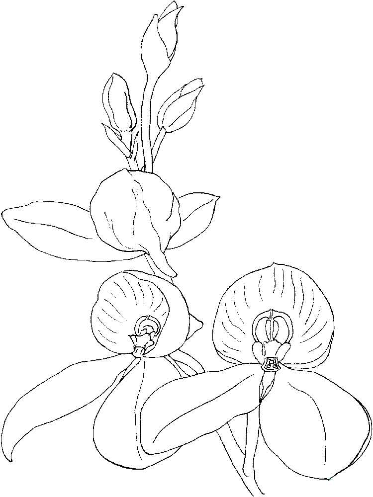 raskraski-orhideya-7