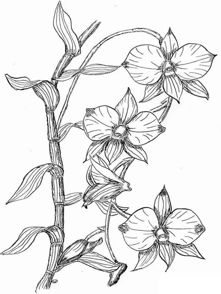 raskraski-orhideya-8