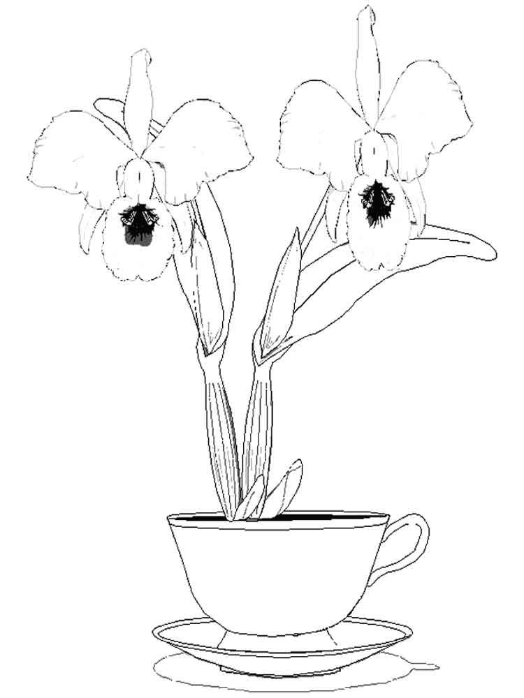 raskraski-orhideya-9