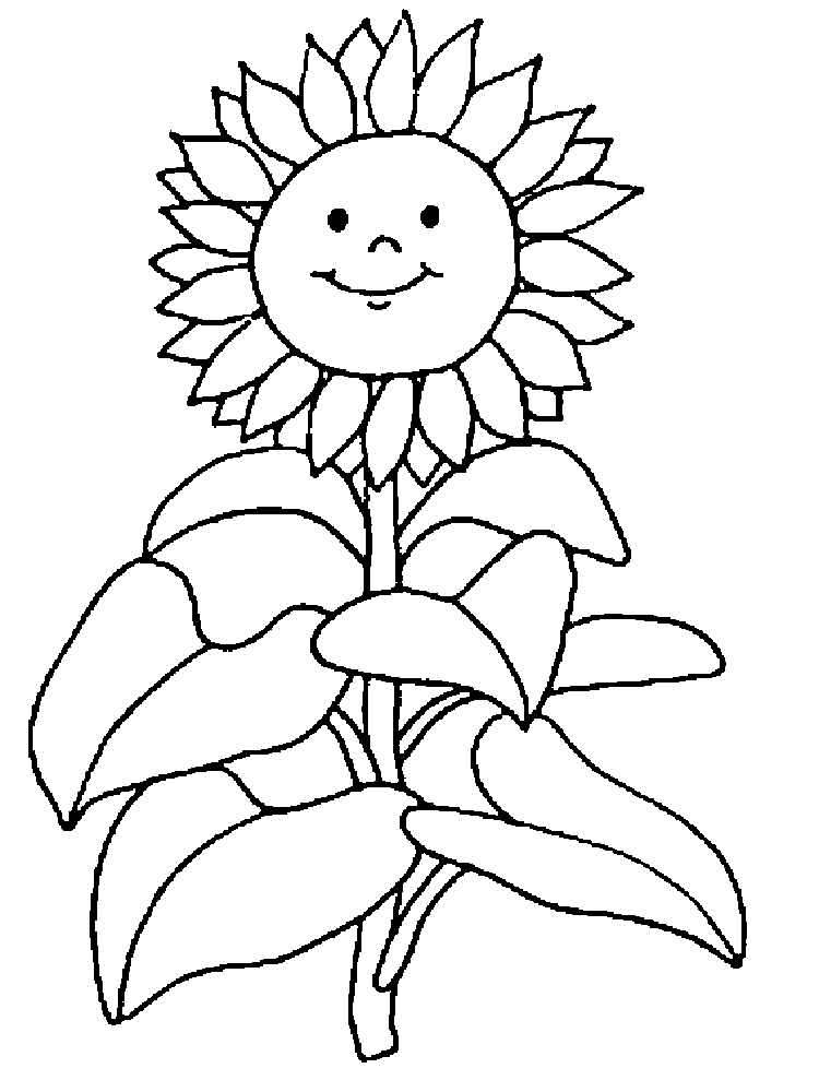 рисунок подсолнухов для раскрашивания как первый