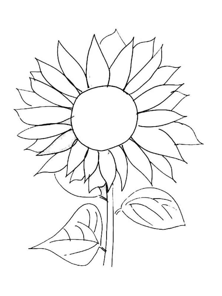 рисунок подсолнухов для раскрашивания