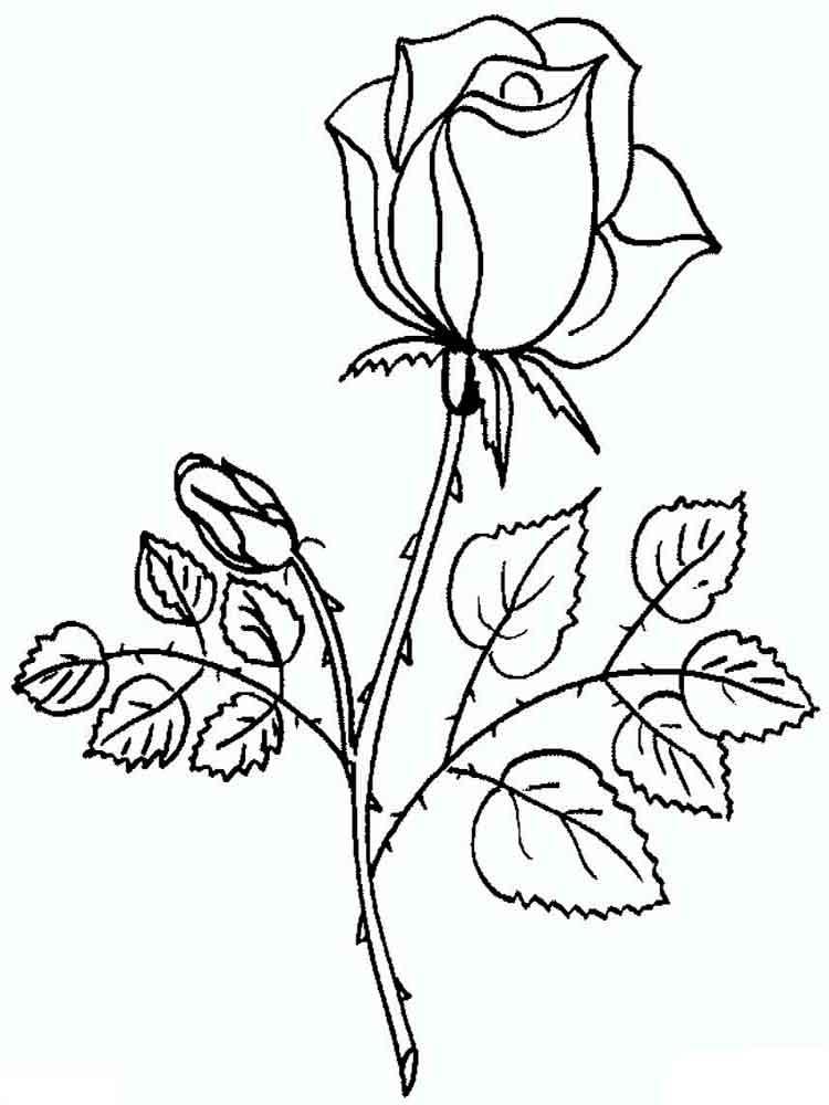 raskraski-rosy-16