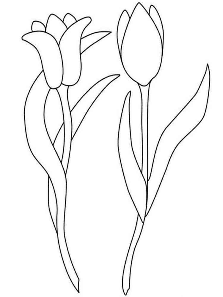 raskraski-tulpany-5