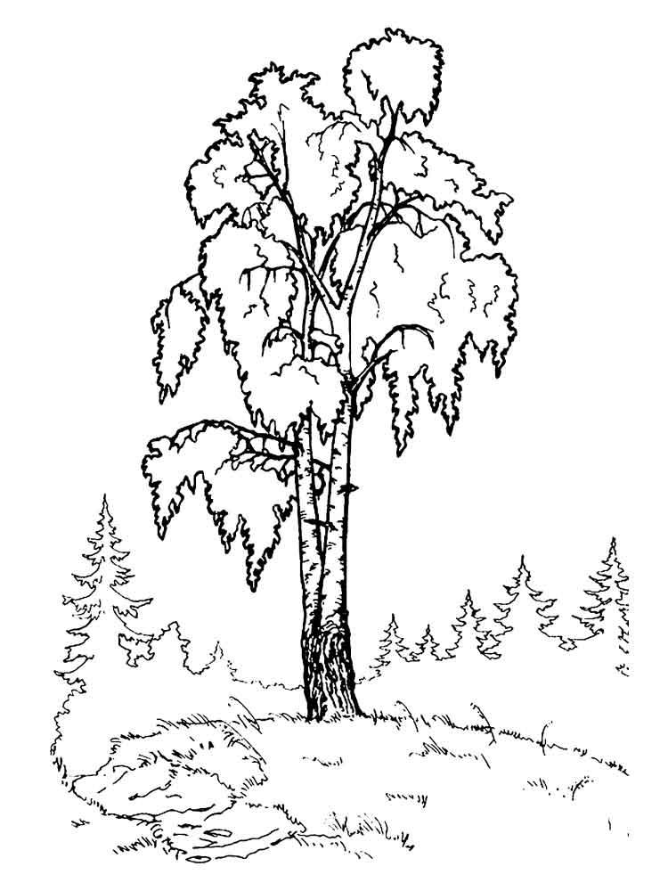 raskraski-bereza-18
