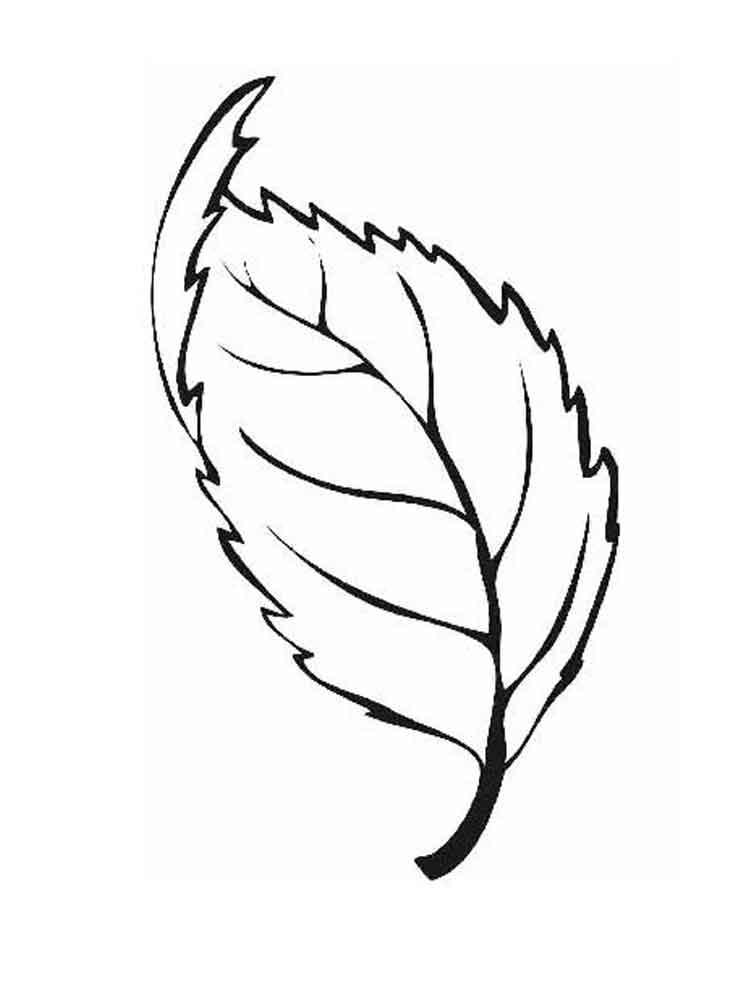 то, раскраска листья березы распечатать одна