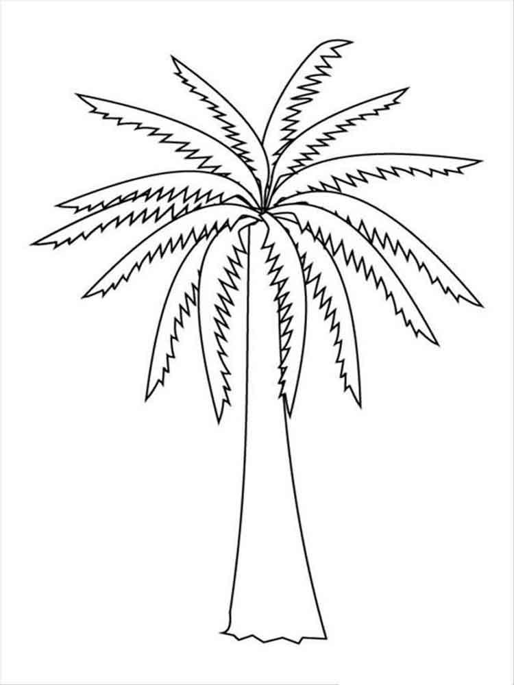 raskraski-palma-17