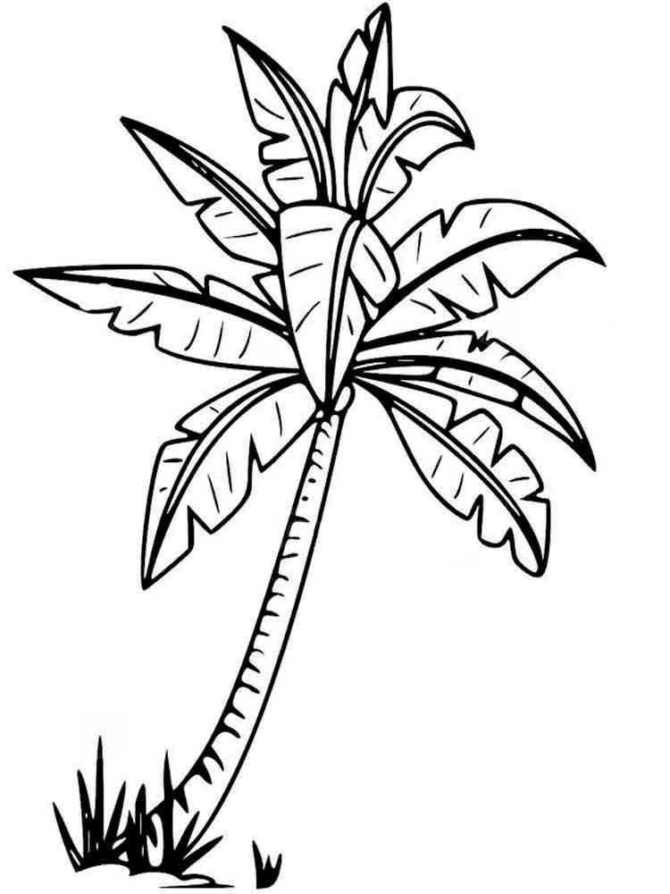 raskraski-palma-4