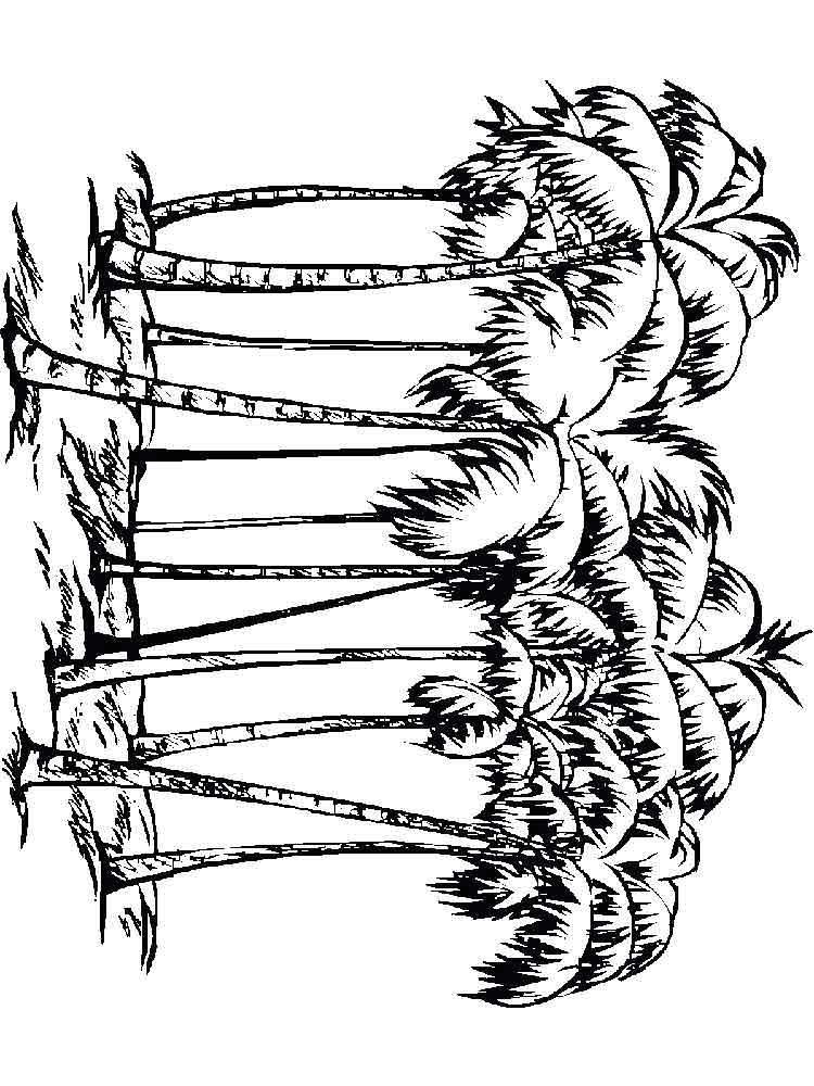 raskraski-palma-8