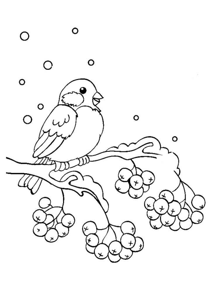 картинки снегирь на ветке рябины для раскрашивания так давно