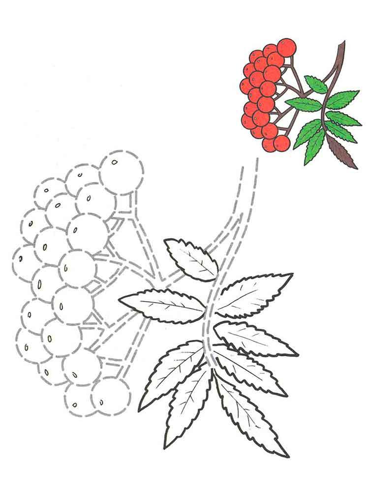 Детский рисунок ветка рябины с ягодами, день медсестры