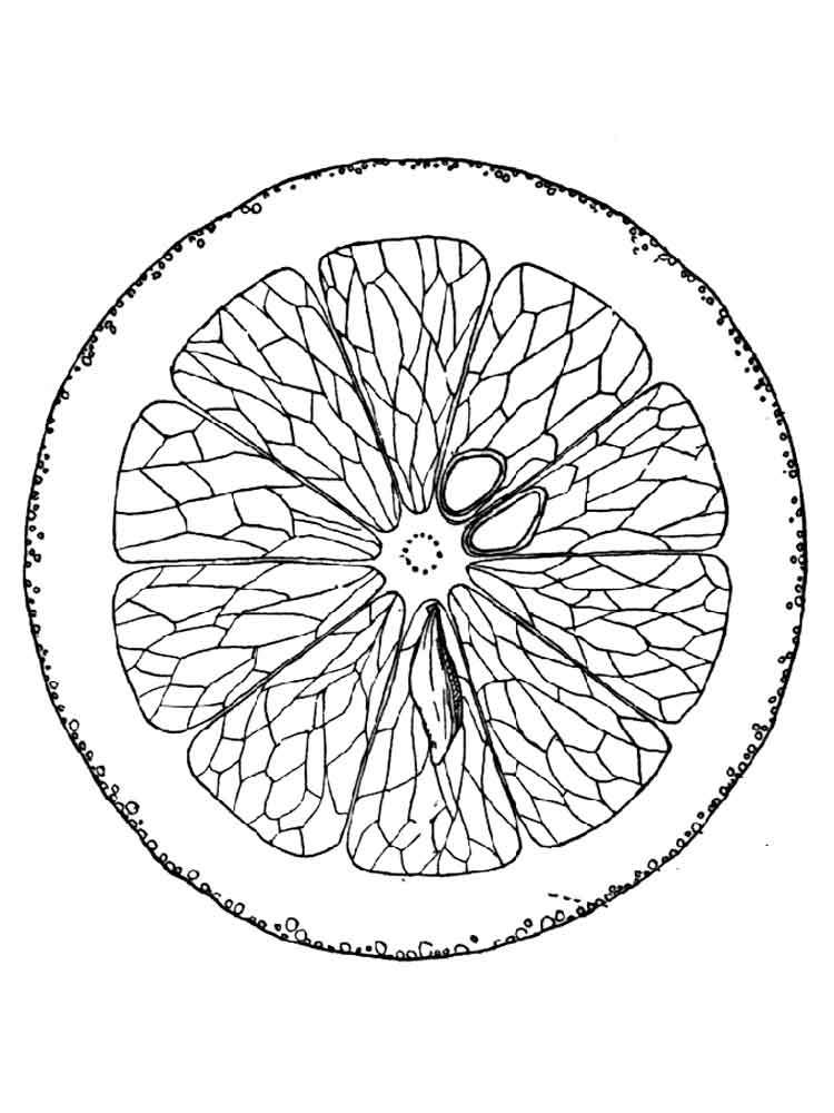 raskraska-apelsin-5