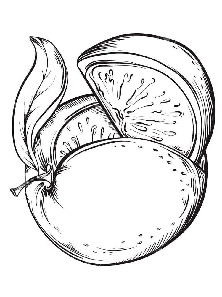 raskraska-grapefrut-4