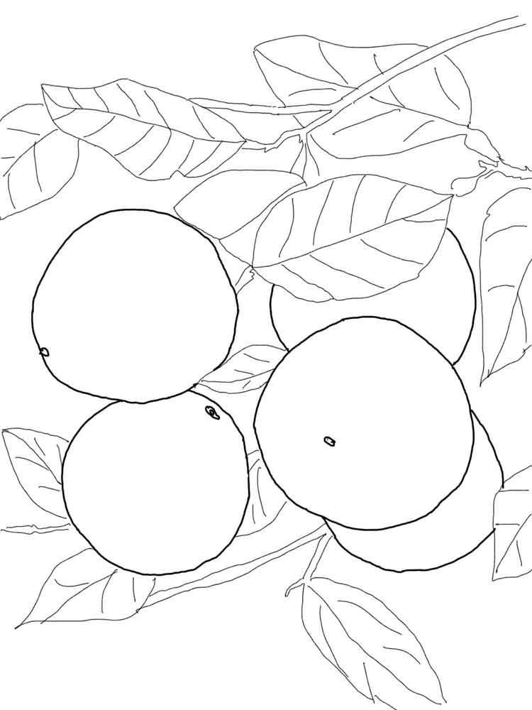 raskraska-grapefrut-8