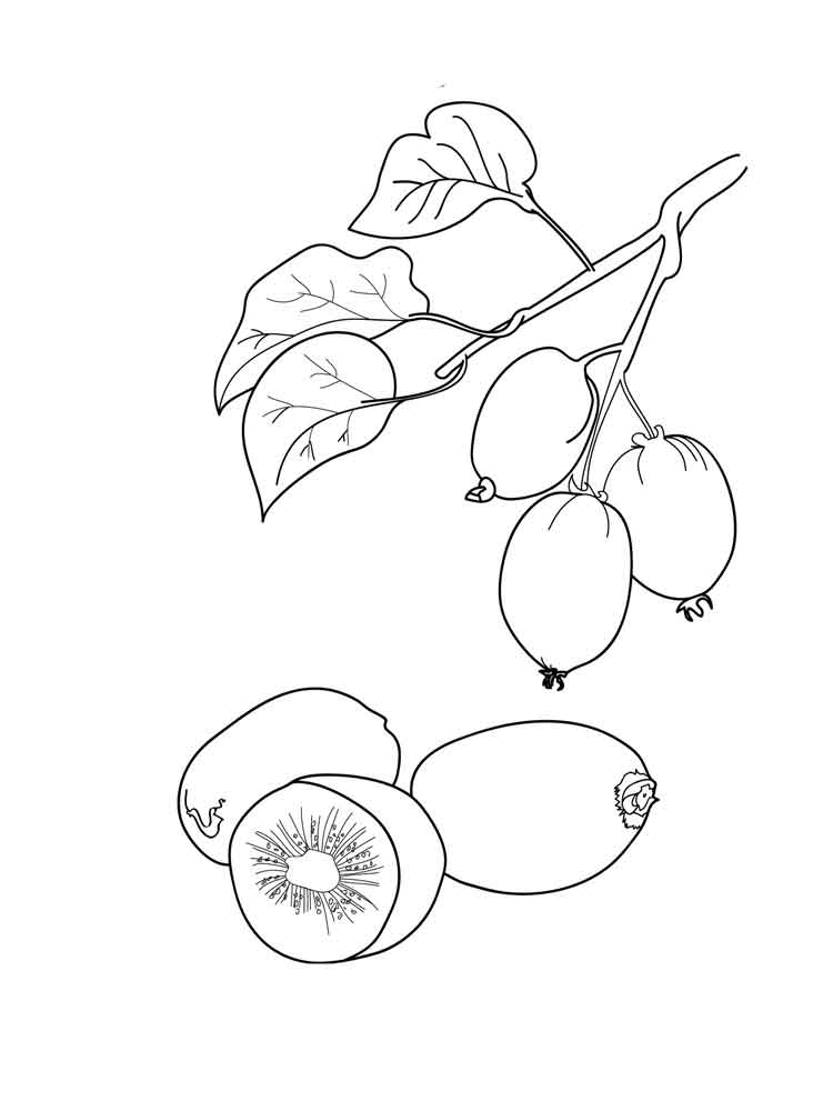 raskraska-frukt-kiwi-2