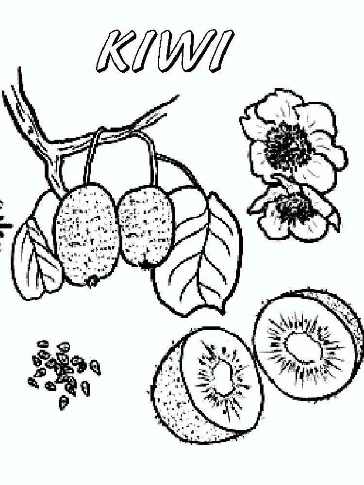 raskraska-frukt-kiwi-7