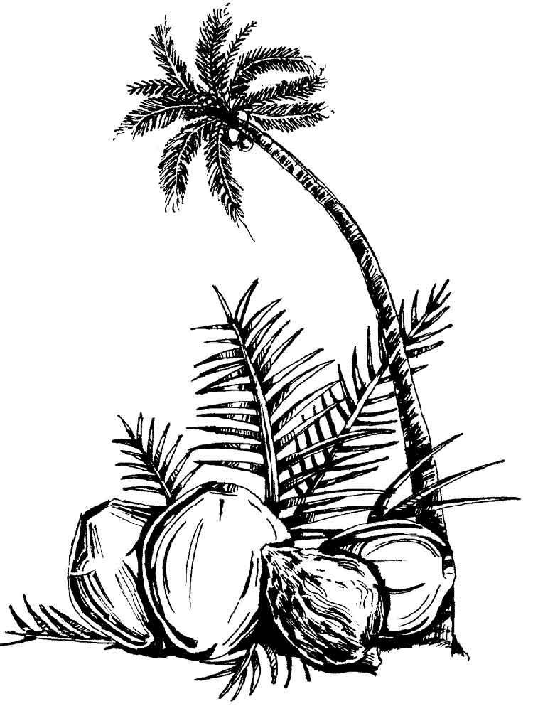 raskraska-kokos-2