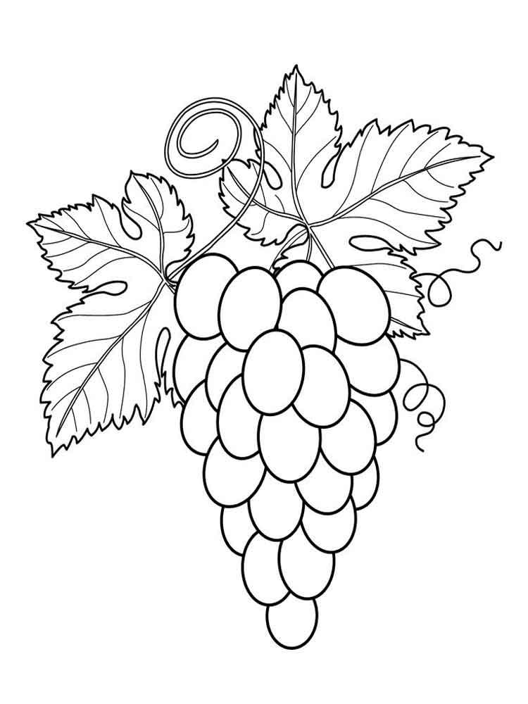 raskraska-vinograd-1