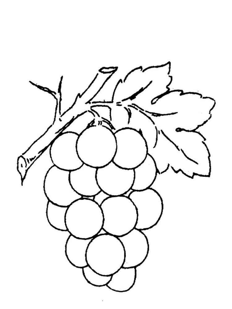 raskraska-vinograd-10